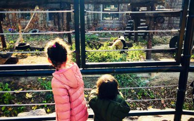 Visiting the Giant Panda